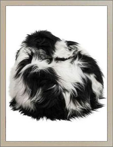 BEAN BAG | Sheepskin black and white