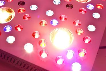 NOVA P2 – 205W CREE LED Pflanzenlicht – Bild 7