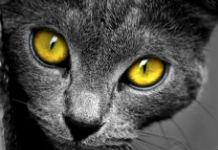 Katzenauge Kontaktlinse