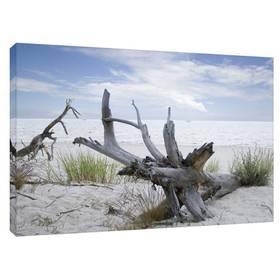 Ostsee Meer Strand Wurzel Leinwandbild ab 40 x 30 cm – Bild 1