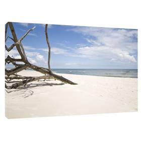 Leinwandbild Ostsee Meer Strand Baum Sandstrand ab 40 x 30 cm