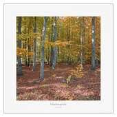 Kunstdruck Herbst Wald Landschaft Fotodruck  ab 30 x 30 cm