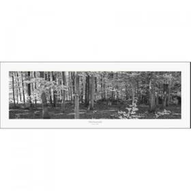 Kunstdruck Herbstbäume Wald Fotodruck  ab 60 x 20 cm – Bild 2