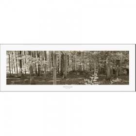 Kunstdruck Herbstbäume Wald Fotodruck  ab 60 x 20 cm – Bild 3