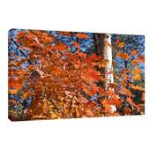 Leinwandbild Leinwanddruck auf Keilrahmen Herbstwald Blätter ab 40 x 30 cm