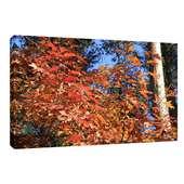 Leinwandbild Leinwanddruck Herbstlaub Herbstwald ab 40 x 30 cm