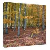 Leinwandbild Herbstlaub Herbst Bäume Wald ab 30 x 30 cm