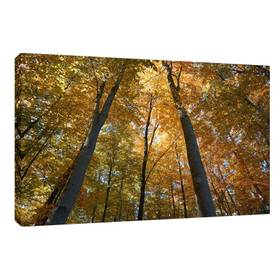 Leinwandbild Leinwanddruck Herbstbäume Herbst Wald ab 40 x 30 cm