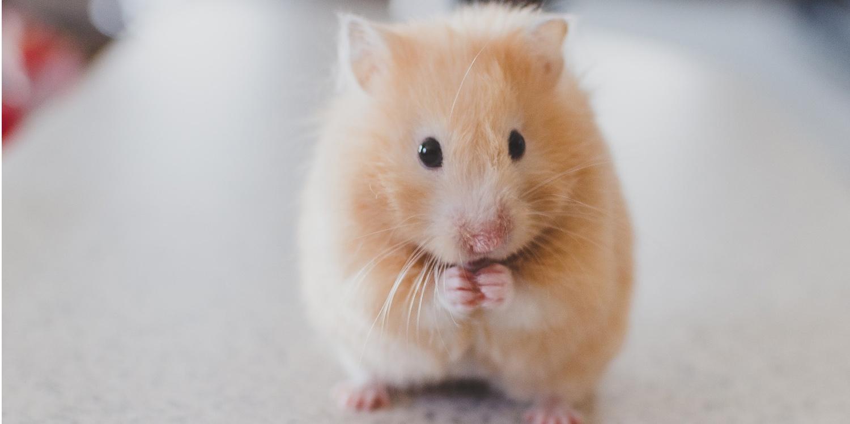 Tierbedarf Kleintierbedarf Kategoriebild Hamster