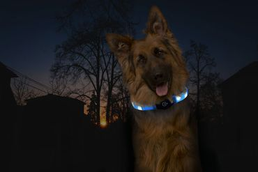 Visio Light LED Halsband gelb – Bild 3