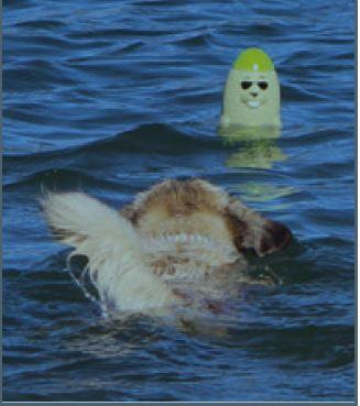 DOOG Seal - Captain Blubber  – Bild 2