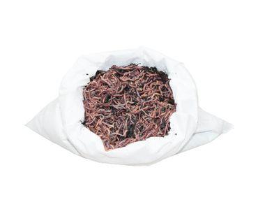 Riesen-Rotwürmer / Dendrobena - 1 kg Mini-Mix (ca. 1500 Stück)