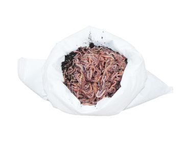 Riesen-Rotwürmer / Dendrobena - 0,5 kg Mix
