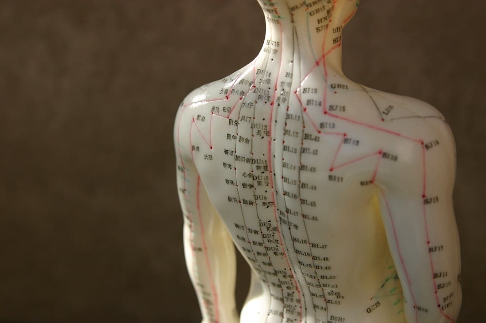 Ein Ganzkörper-Akupunktur Modell aus dem Sortiment
