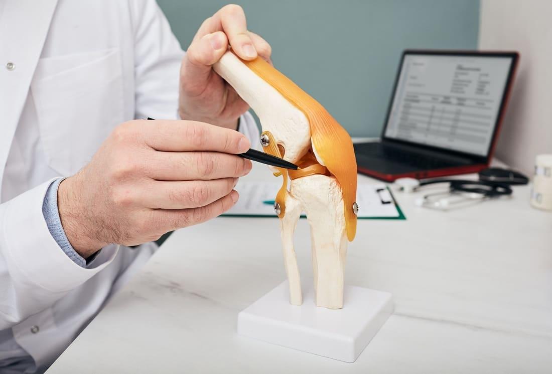 Arzt zeigt mit einem medizinischen Lehrmittel, einem Kniemodell, die Anatomie des Menschen