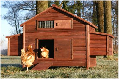 XXL Freiland Hühner-Farm  – Bild 1