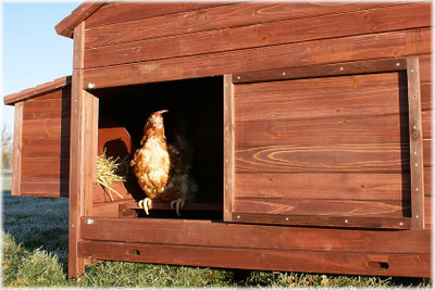 XXL Freiland Hühner-Farm  – Bild 4