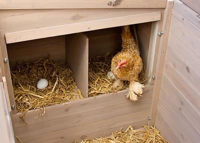 Hühnerstall Emma – Bild 4