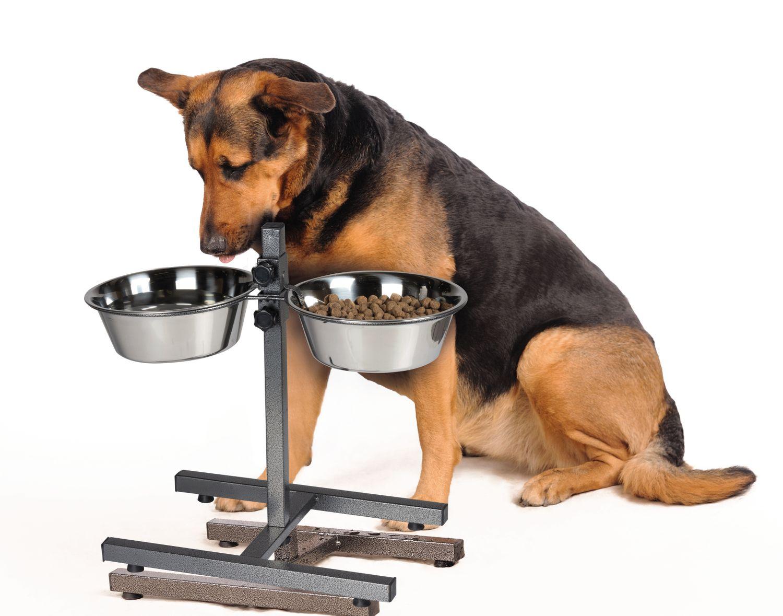 Gamelle Pour Chien Hauteur set des gamelles pour chien