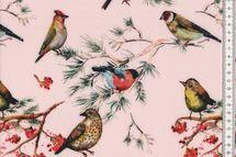 Softshell Birds Vögel in rosa 001