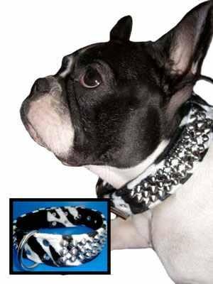 Zebra Hundehalsband – Bild 1