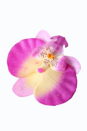 Orchidee Haarblüte Haarclip – Bild 5