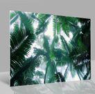 Glasbild Palmen
