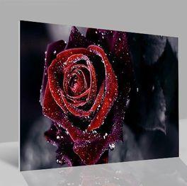 Glasbild Rose