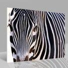 Glasbild Zebra