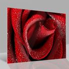 Glasbild Rose 001
