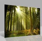 Glasbild Wald