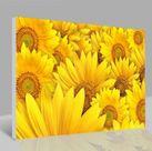 Leinwandbild Blumen 001