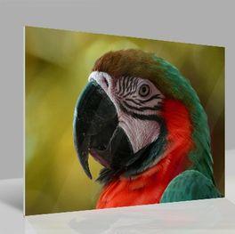 Glasbild Papagei