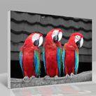 Leinwandbild Papageien 001
