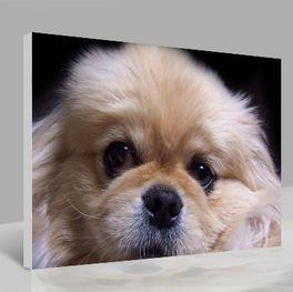 Leinwandbild Hund