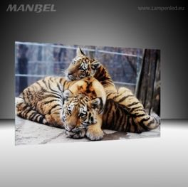 Glasbild Tiger