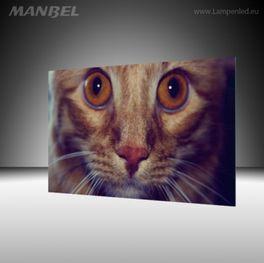Glasbild Catface