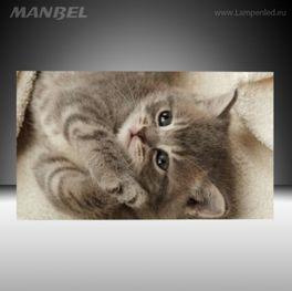 Glasbild Baby Kitten