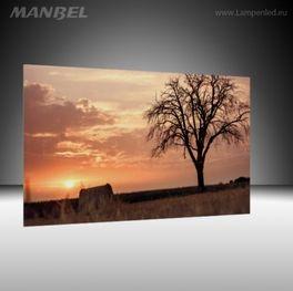 Glasbild Baum im Morgengrau