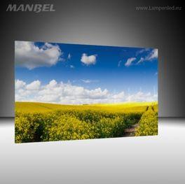 Glasbild Rapsfeld