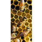 Türfolie Bumblebee