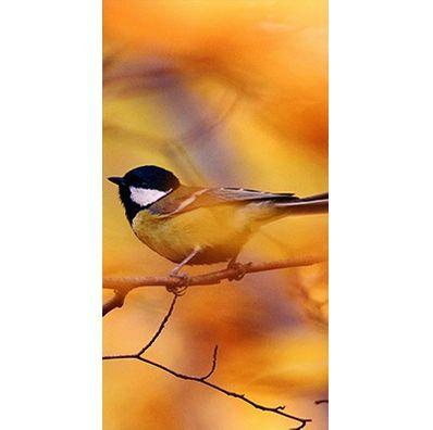 Türfolie Birdinatuum