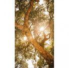 Klebefolie für Duschkabine Sonnenlicht - Baum