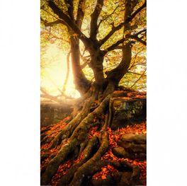 Klebefolie für Duschkabine Sonnenaufgang im Wald