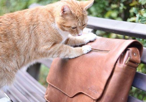 Leder Tasche Über uns Katze