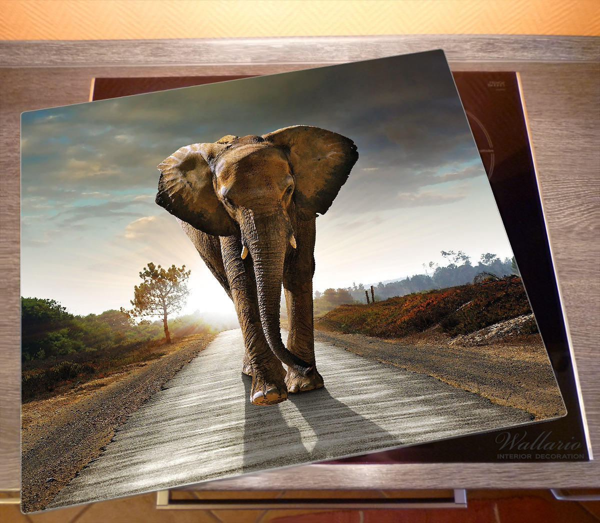Herdabdeckplatte Elefant bei Sonnenaufgang in Afrika schwarzweiß