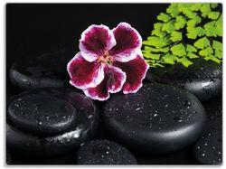Glasunterlage Purpur Geranienblüte auf schwarzen Basaltsteinen, benetzt mit Wasser-Tropfen – Bild 1