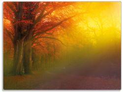 Glasunterlage Bunter Herbst - Waldlandschaft bei Nebel in Regenbogenfarben – Bild 1