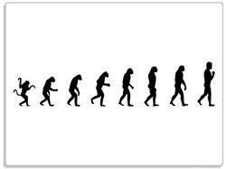 Glasunterlage Evolution - Die Entwicklung des Menschen – Bild 1