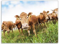 Glasunterlage Kühe im Sommer auf der Weide – Bild 1